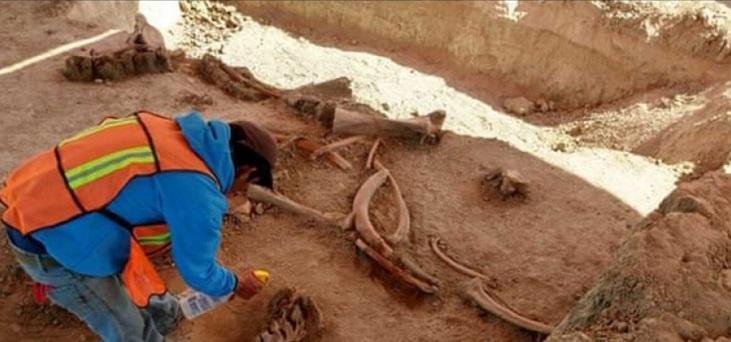 کشف بقایای حدود 60 ماموت در مکزیک